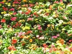 Flower Garden kc