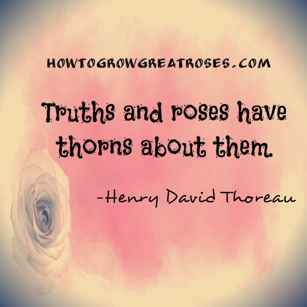 Truth & Roses