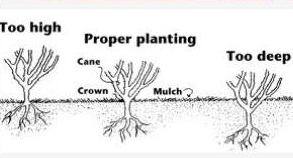 planting_pic