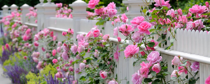 Various Types of Roses That You Can Consider For Your Garden