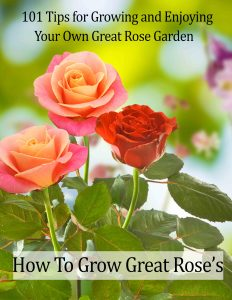 Tips for Growing and Enjoying Your Own Great Rose Garden!